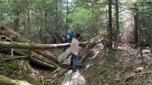 Wildnispfad – Wandern mit den Kindern in der wilden Natur des nördlichen Schwarzwalds