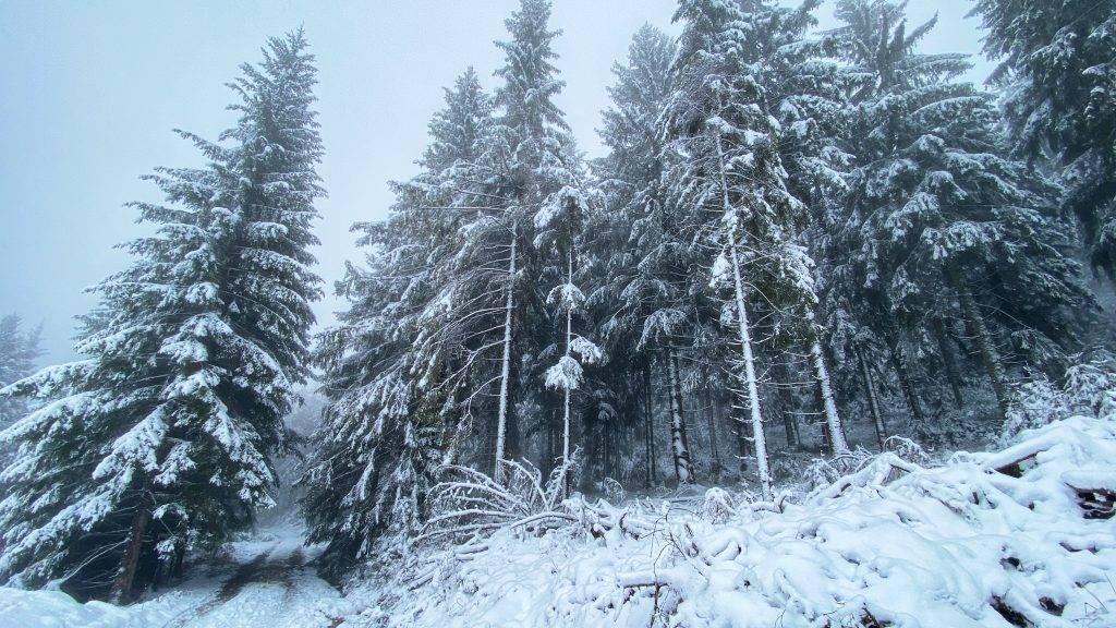 Nördlicher Schwarzwald Winter Schnee