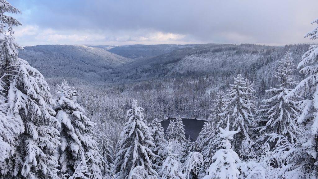 Wildsee Winter Schwarzwald