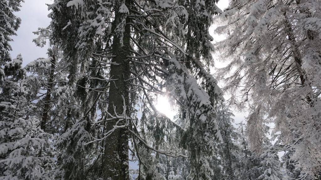 Schwarzwald Winter Schnee