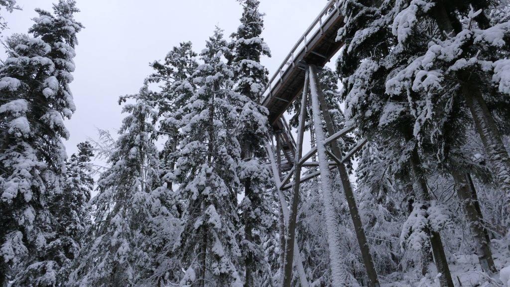 Baumwipfelpfad Winter Bad Wildbad