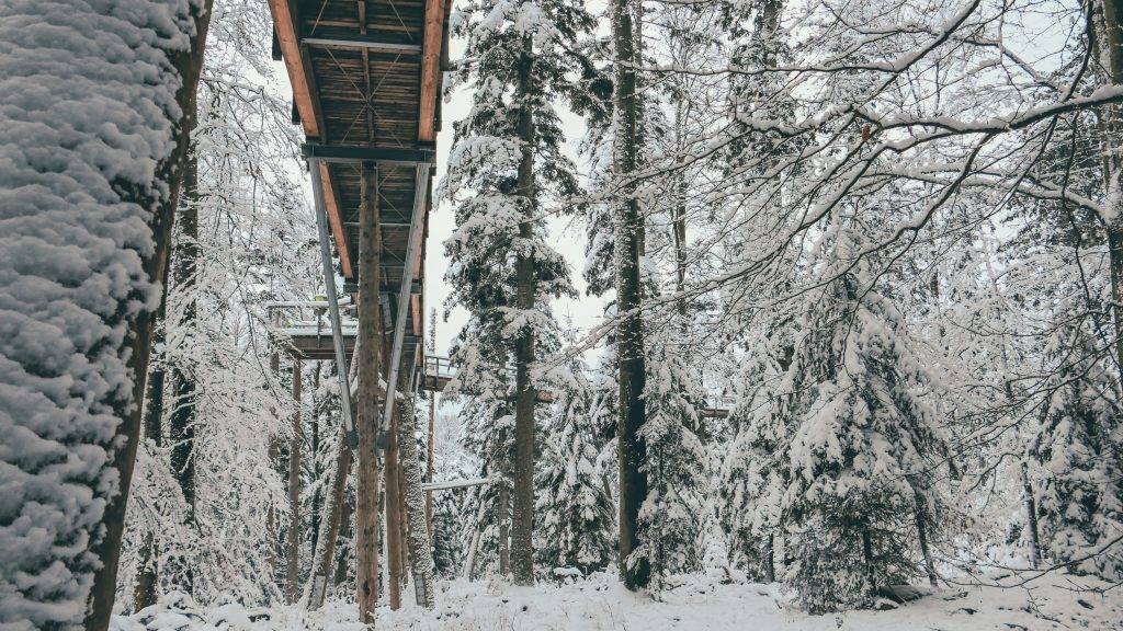 Baumwipfelpfad Winter