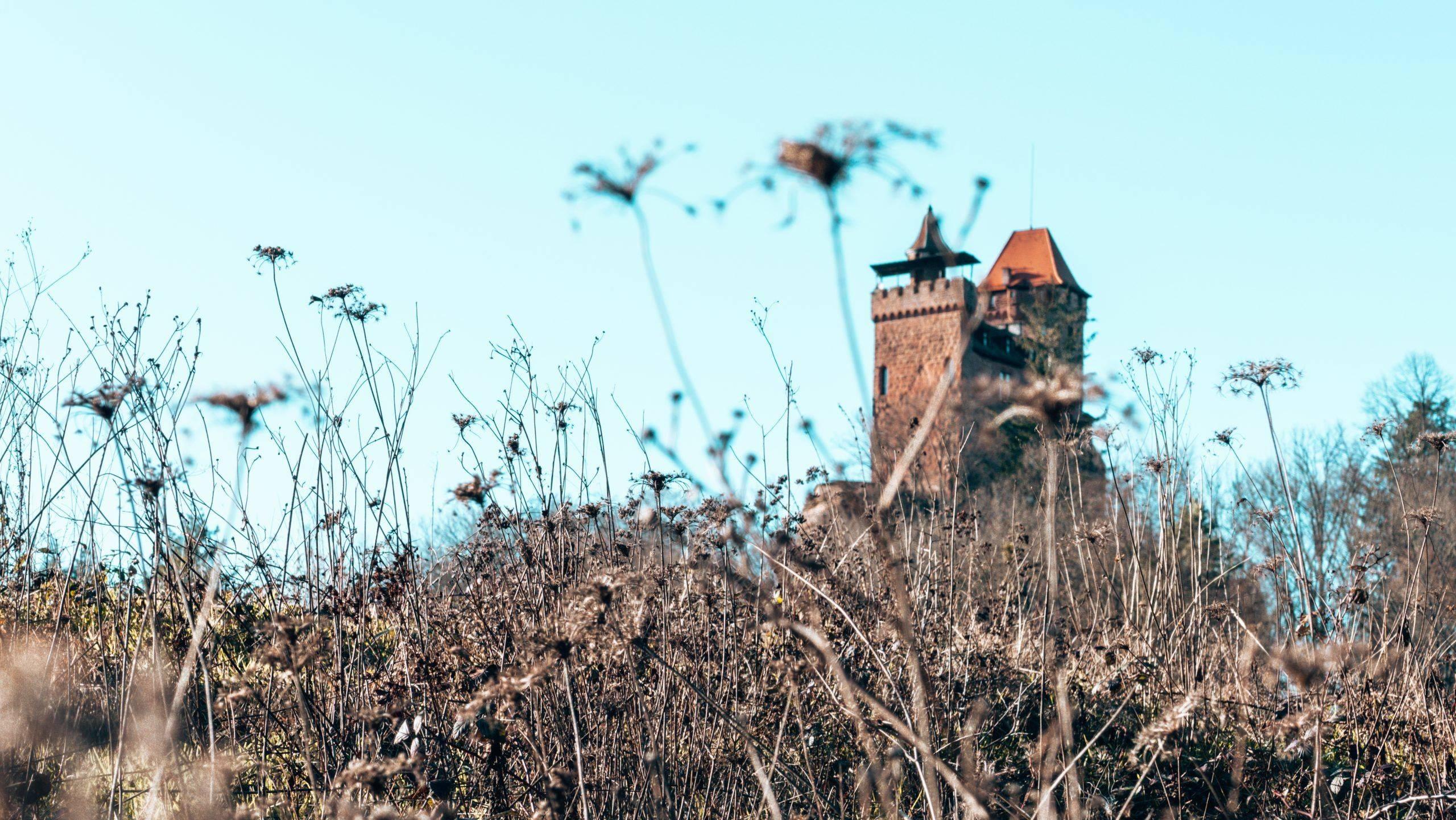 Wandern mit den Kindern um die Burg Berwartstein – ein echtes Wander- & Abenteuerparadies im Pfälzerwald