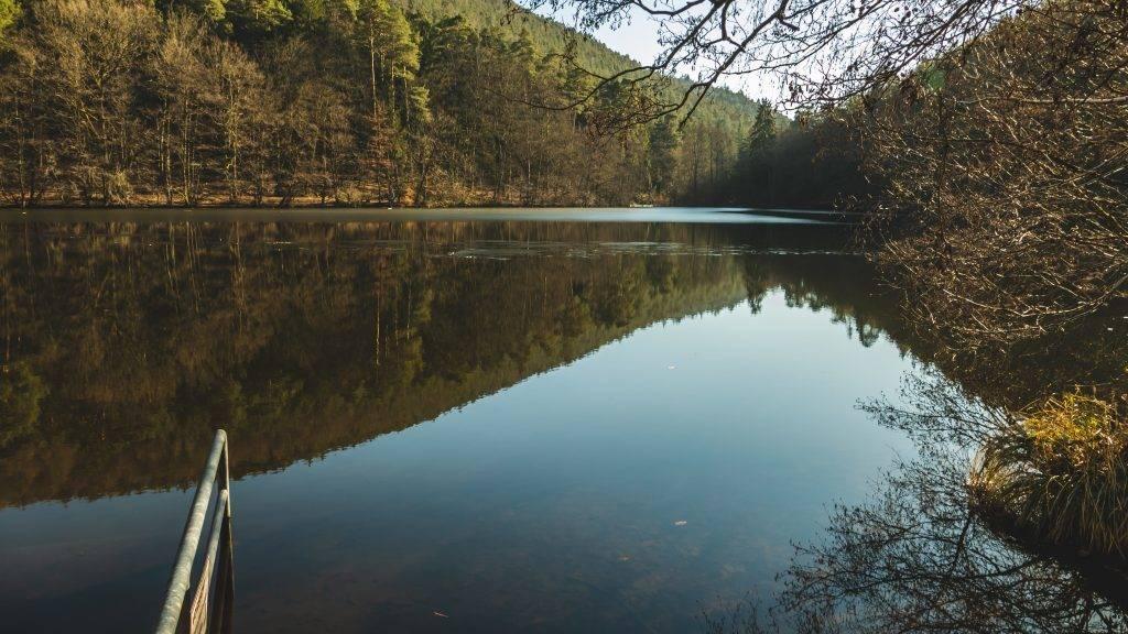 Schwimmen See Pfälzerwald