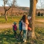 Horbachpark in Ettlingen – unzählige Spielplätze, ein sportlicher Quizrundweg und ganz viel Natur – der perfekte Ausflug?
