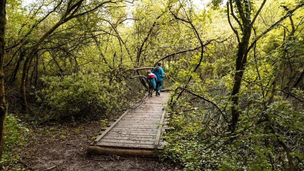 Bohlenweg Auen Wildnispfad
