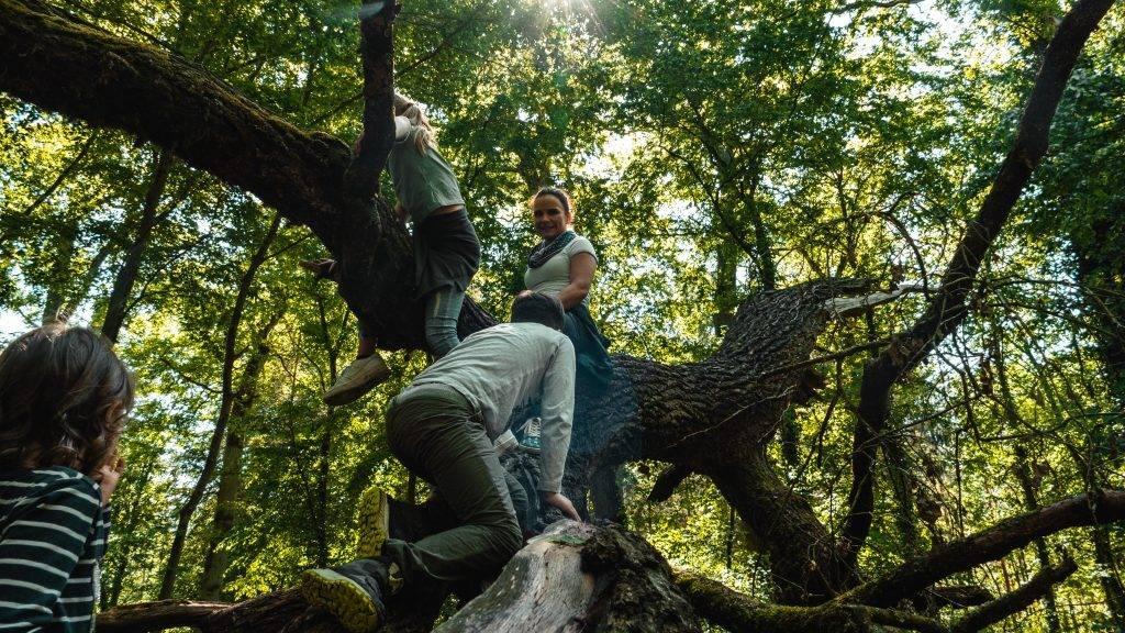 Tyrannosaurus Rex Kinder Klettern