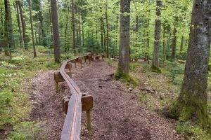 Holzweg in Baiersbronn – Familien Erlebniswanderung mitten im Schwarzwald