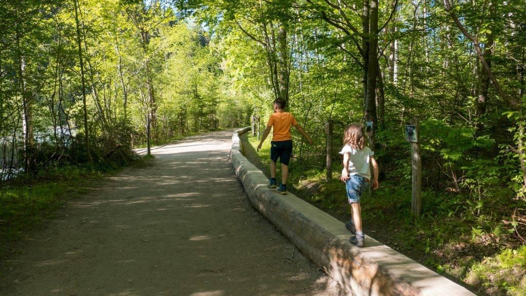 Walderlebniszentrum Ziegelwies Wandern Auwaldpfad