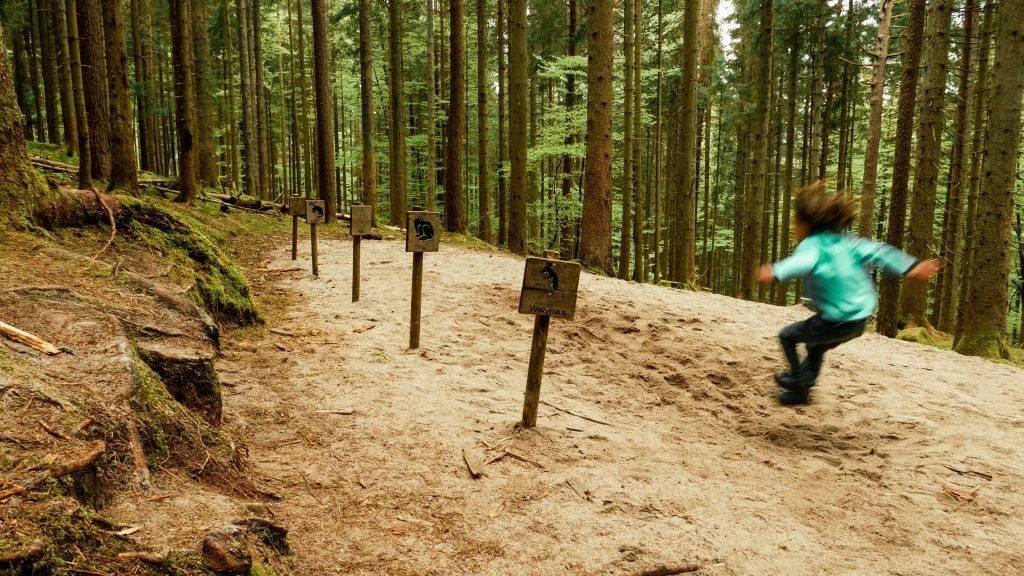 Weitsprung Holzweg Schwarzwald