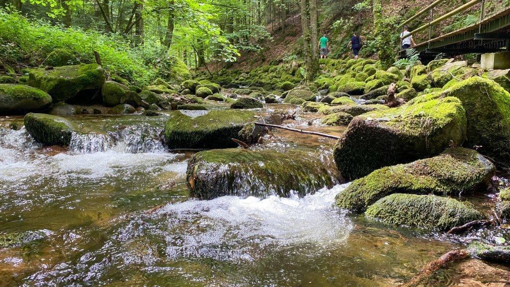 Grobbach Schwarzwald Wasser