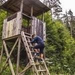 Holzwurmpfad in Bad Wildbad – eine einfache Erlebniswanderung für die ganze Familie im Schwarzwald