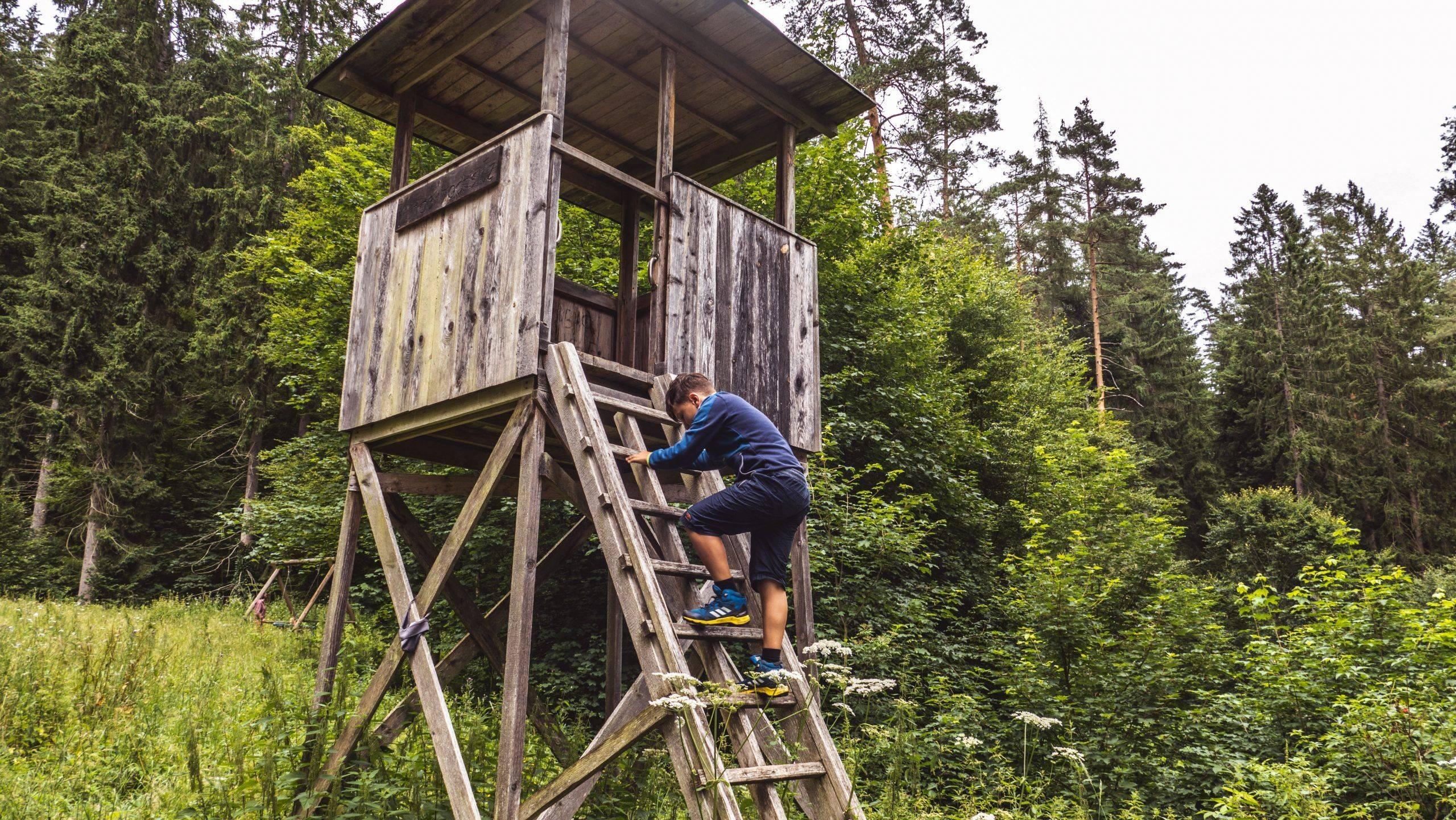 Read more about the article Holzwurmpfad in Bad Wildbad – eine einfache Erlebniswanderung für die ganze Familie im Schwarzwald