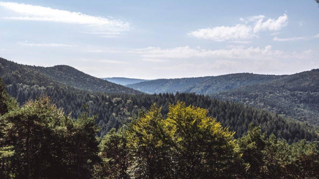 Ausblick Pfälzerwald